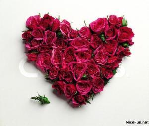 Rose-06